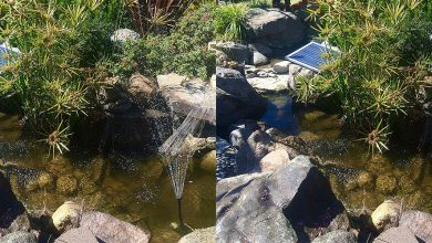 Best Solar Powered Water Pump